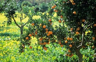 Grow Your Own Garden Fruit Trees For Real Fruits!