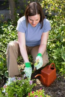 Gardening Tips To Make Your Garden Look Beautiful!