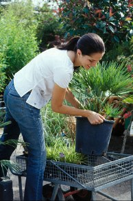Want To Plant Evergreen Shrubs? Get Shrubs From Plant Nursery!