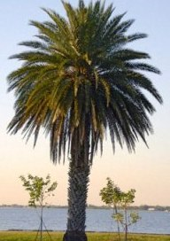 Types Of Palm Trees You Can Grow In Your Garden!