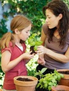 Proper Plant Care For Perfect Growth Of Plants In Your Garden!