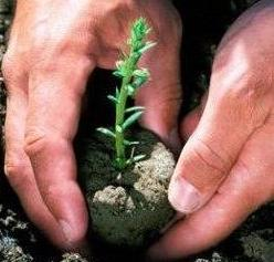 Tree Planting In Your Garden To Conserve Energy And Save Environment!