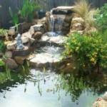 Know How To Build Your Own Backyard Pond!