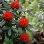 Have A Clear Idea About Garden Shrubs Before Buying!