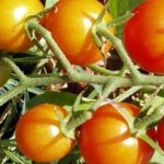 11 Planting Tips For Growing Vegetables!
