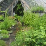 How To Keep Your Greenhouse Plants Free From Diseases?