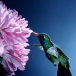 Easy Ways To Attract Humming Birds To Your Garden