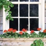 Best Growing Options In Window Boxes