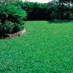 Do You Want A Beautiful Lawn This Spring?
