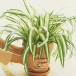 5 Tips To Keep House Plants Healthy