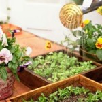 Container Water Gardening To Create The Illusion Of A Pond In Your Back Yard
