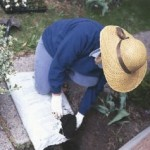 Mulching Is An Important Part Of Garden Health