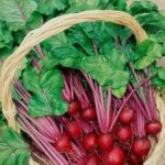 Organic Gardening Healthier For You And The Planet