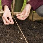 Home Grass Planting Ideas