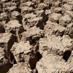 Is It Possible To Plant Trees In Desert Soil Containing Caliche?