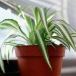 Selecting Indestructible House Plants