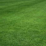 America's Most Popular Grass Kentucky Blue