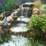 Consider Your Backyard Pond Needs Before Digging