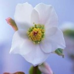 Early Blooming Flowers For Garden Beauty
