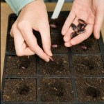 Easy Seeds For Beginners In Home Gardening