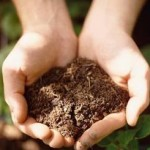 Quick And Easy Compost For Home Gardens