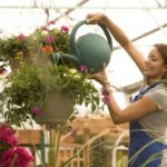 Planning For The Ideal Green House Garden