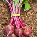 Growing Organic Vegetables The Easy Way