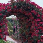 Garden Décor: The Arbor Or Pergola