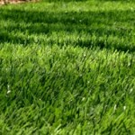 How To Decide If Artificial Turf Is The Best Option For Your Yard?