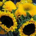 Growing Sunflowers To Add Beauty To Your Gardening Space