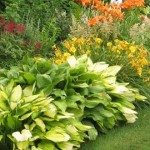 How To Grow Perennial Plants In A Garden?