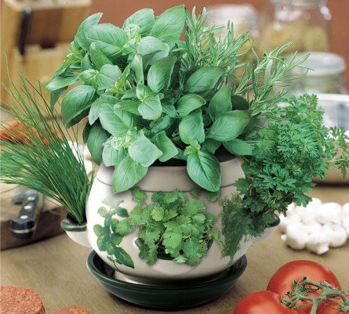 indoor herb pot