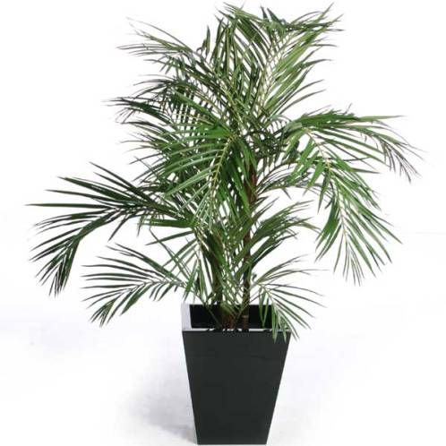Air Cleaning Plants For Your City Apartment To Create The