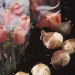 How To Grow Flower Bulbs?