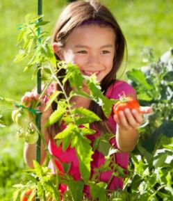Image Result For Advantages And Disadvantages Of Growing Your Own Vegetable Garden