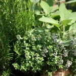 All You Need To Know About Herb Gardening