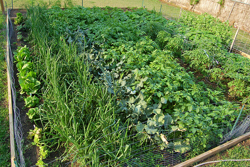 green house crops