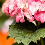 How To Choose The Right Perennials For Your Garden?