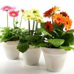 Beautify Your Home With Indoor Gardening