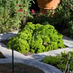How To Create Your Own Italian Herb Garden?