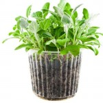 Pots Can Be The Ideal Place For Your Kitchen Herbs