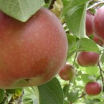 Organic Pesticides Can Help Grow Organic Fruits
