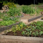 What You Should Know For Successful Raised Bed Gardening?