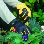 What Gloves Are Fit For Which Gardening Activity?