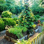 8 Helpful Guiding Lines For Summer Gardening