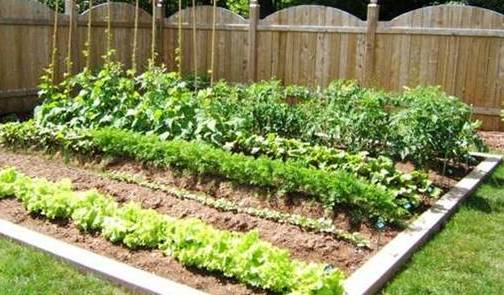 Top 5 Advantages Of Having Your Own Vegetable Garden
