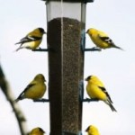 The Importance Of Having Bird Houses Or Bird Feeders In Your Garden