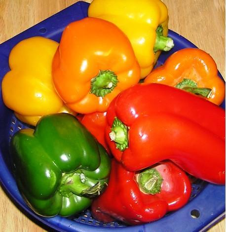 growing peppers in garden 2
