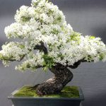 30 Awe-Inspiring Outdoor Bonsai Plants