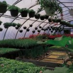The Basic Steps In Building A Greenhouse